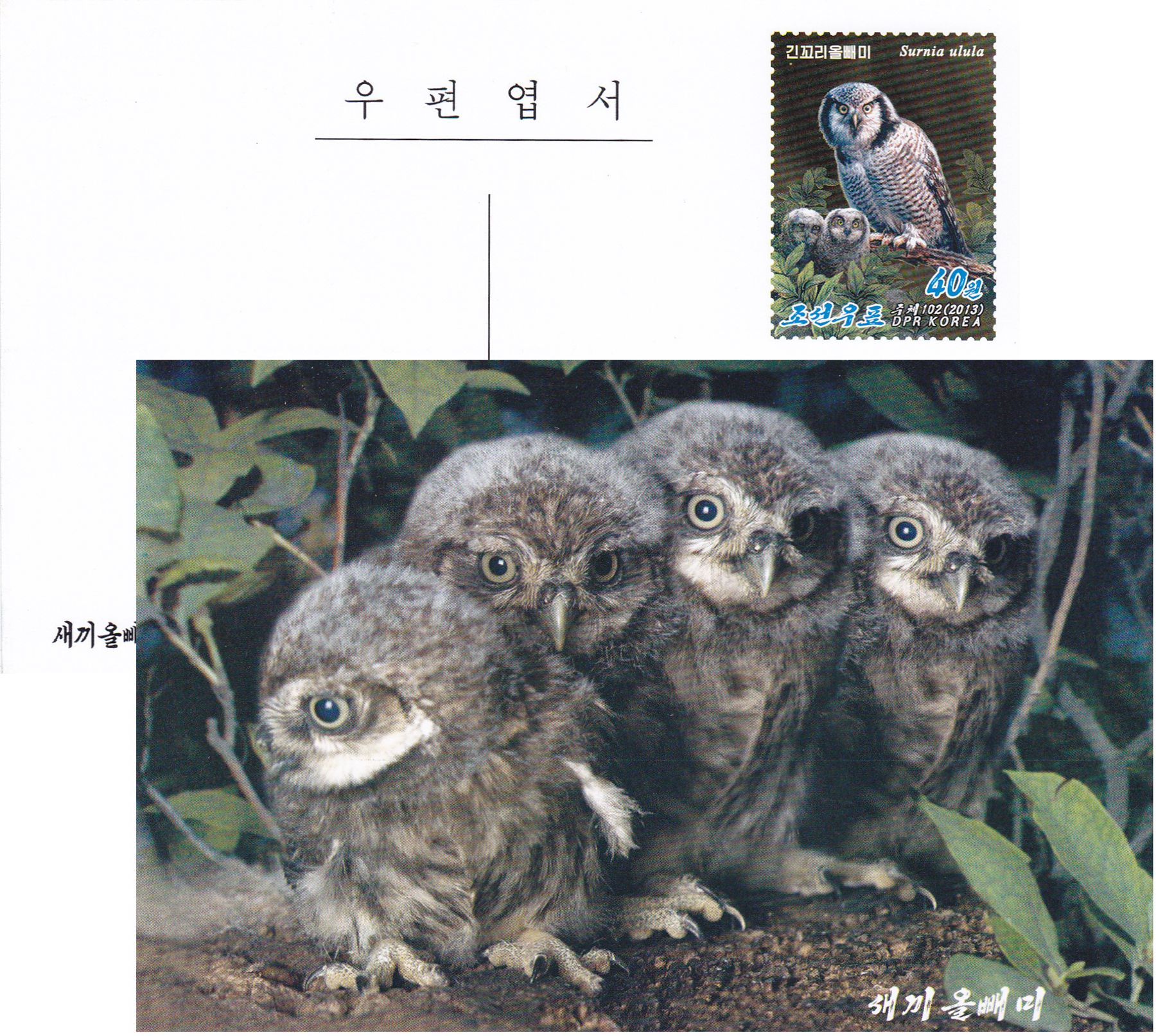 "L9390, Korea ""4 Little Owls"", Postal Card, 2013"